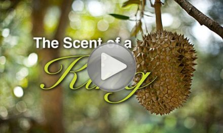 Multimedia: Durian, The Scent of a King