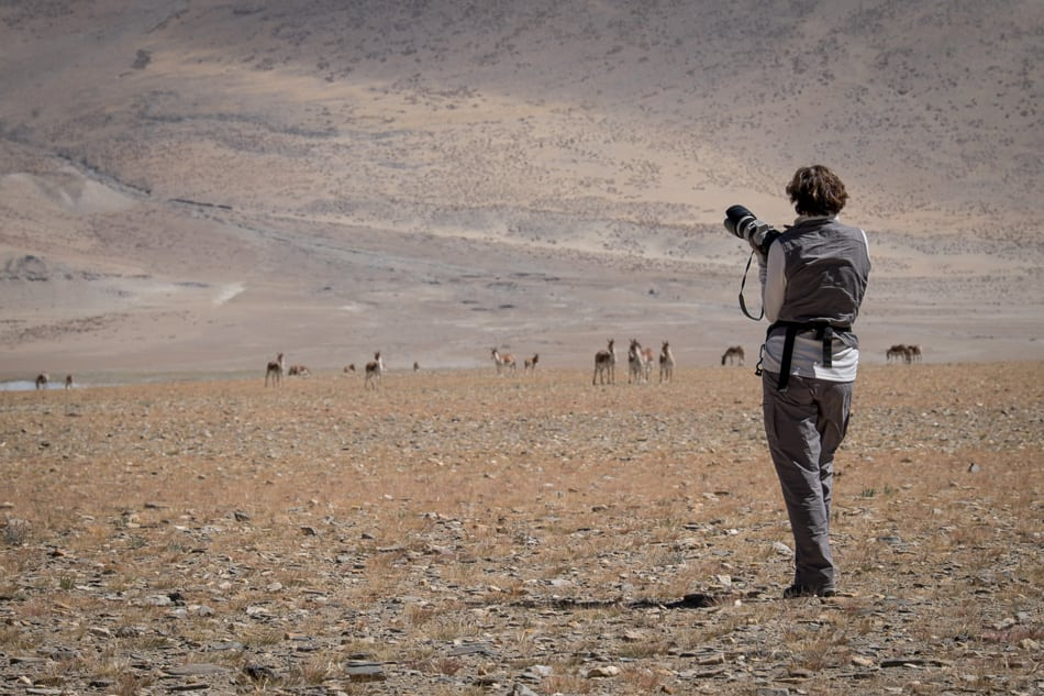 France Leclerc prepares to photograph Kiang (Tibetan Wild Ass).