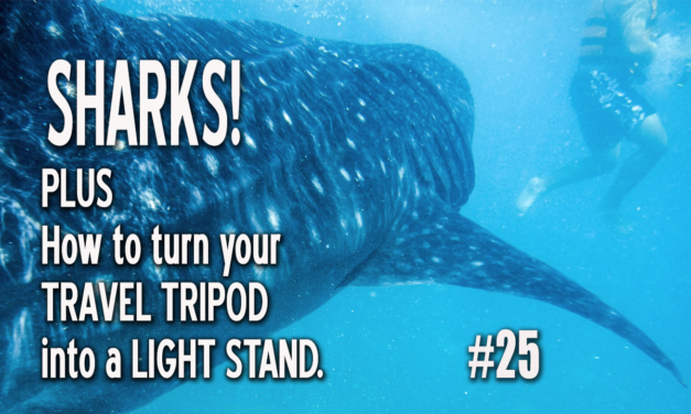 SHARKS! (and how to turn a travel tripod into a light stand.)